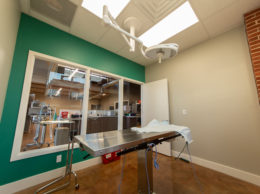 3 Tips for Designing Your Veterinary Practice